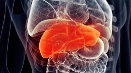lab-engineered-liver-1