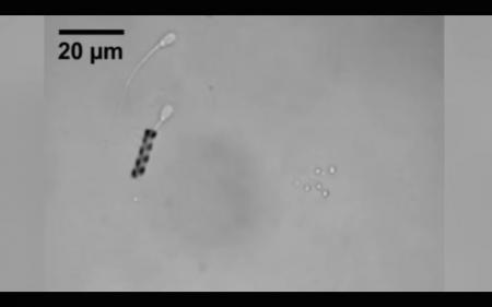Создан экзоскелет для сперматозоида