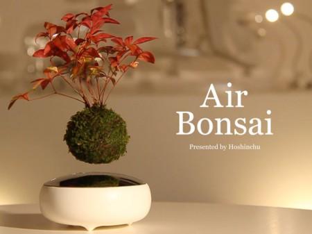Разработан бонсай парящий в воздухе
