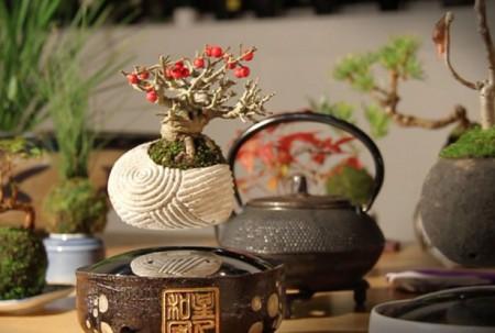 air-bonsai-by-hoshinchu-air-bonsai-garden2