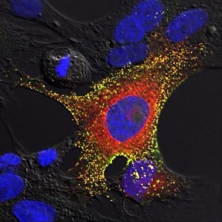 Пример летучей мыши подтолкнул ученых к истреблению вирусов