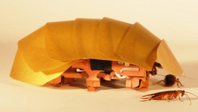 Скоро для спасения жертв катастроф будут использовать таракановм