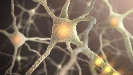 Ученые научились очень быстро восстанавливать связь между нейронами