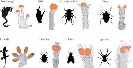 Ученые придумывают человека-геккона вместо человека-паука