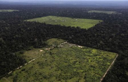 140220-deforestation-jsw-1212p_44a17716d0a0e28154dc2907d07152c1.nbcnews-ux-960-700