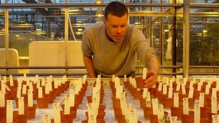 """Ученые получили плоды первых """"марсианских"""" культур"""