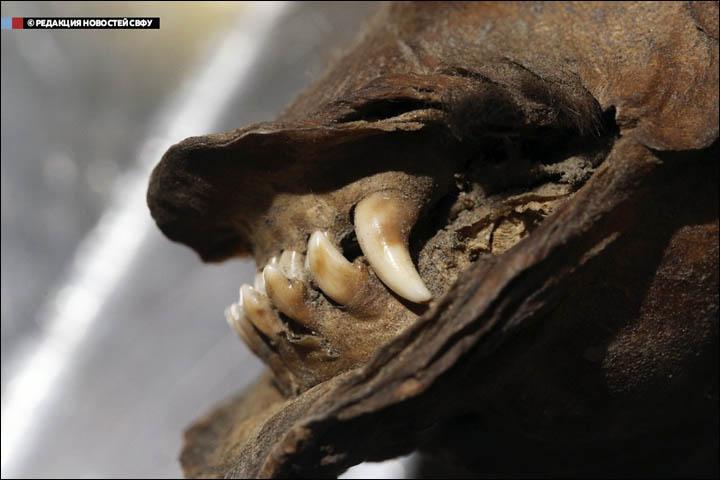 inside_teeth