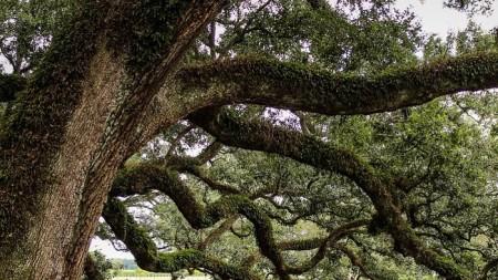 Ученые будут собирать кинетическую энергию с деревцев