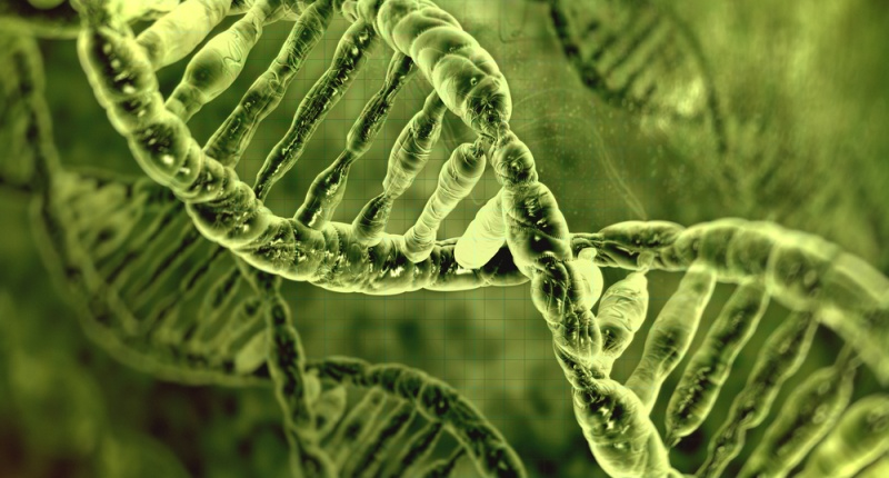 DNA-molecules-via-Shutterstock-800x430