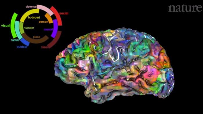 """Ученые выяснили где мозг """"хранит слова"""""""