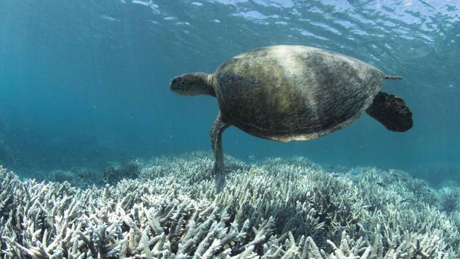 """Ученые нашли """"секретный"""" коралловый риф в реке"""
