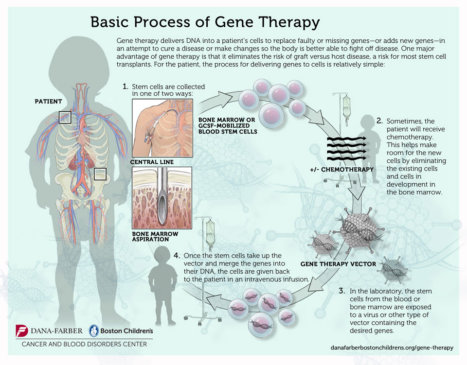 gene-therapy-process-960