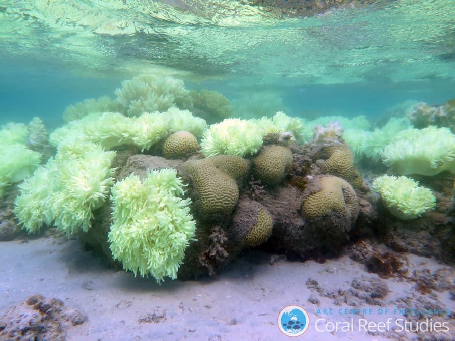 93% Большого Рифа пострадали из-за повышения температуры воды