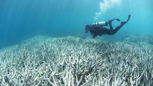 Угольная пыль вредит Большому Барьерному Рифу
