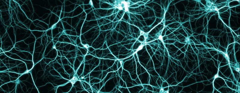 Brain_Cells