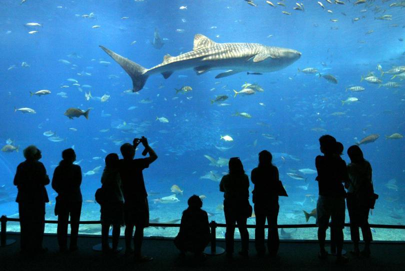 Ученые обнаружили признаки личности у акул
