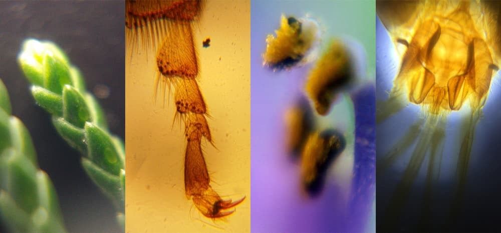 На Kikstarter появился карманный микроскоп