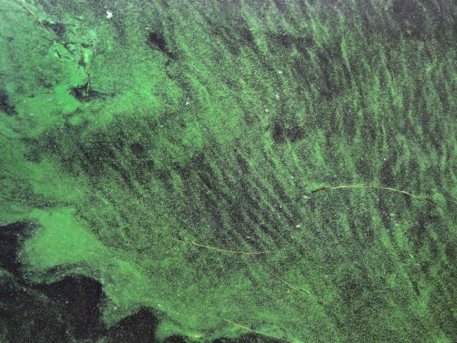 Ядовитые водоросли отравляют жизнь во Флориде