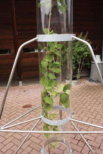 Экологи предлагают жимолость как естественный фильтр воздуха