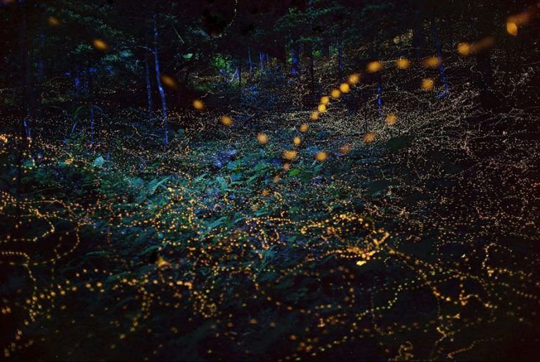 В Японии сумели фотографировать светлячков при длинной задержке