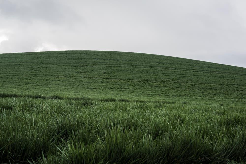 Ученые: Обыкновенная трава вполне может стать источником водорода