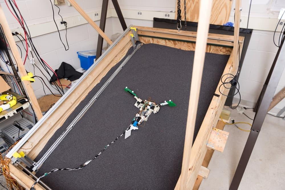 Создан робот-модель илистого прыгуна для понимания эволюции