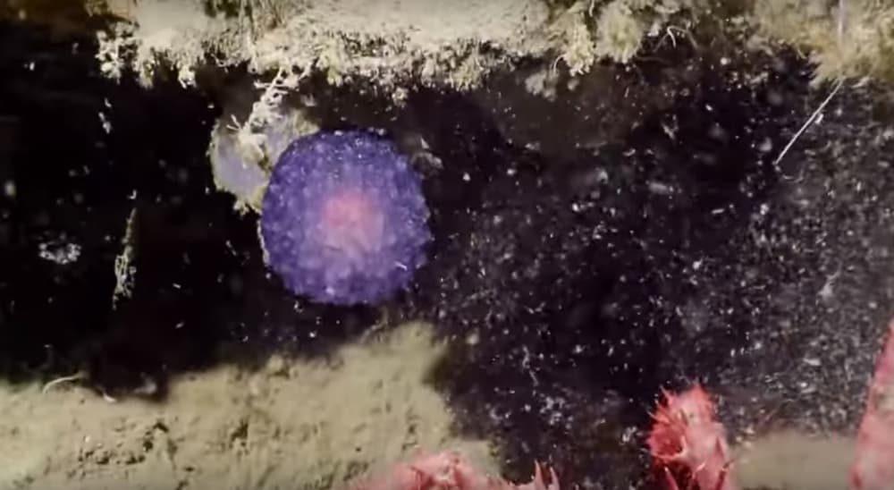 Ученые обнаружили на дне океана таинственный фиолетовый шар