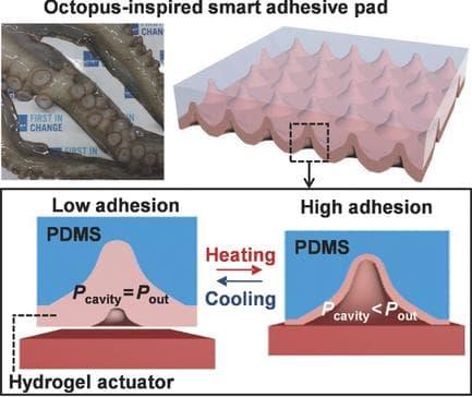 Ученые создали материал с присосками как у осьминога