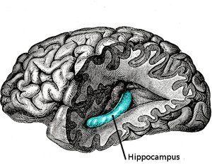 Разрабатывается нейро-имплант для улучшения памяти