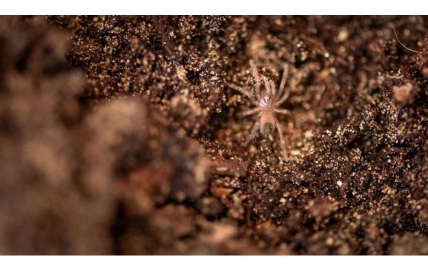 В Великобритании редкие тарантулы принесли потомство