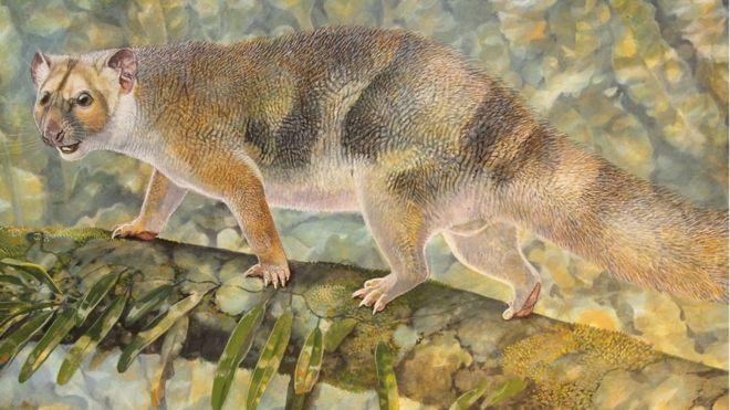 Ученые обнаружили вАвстралии останки вымерших карликовых львов
