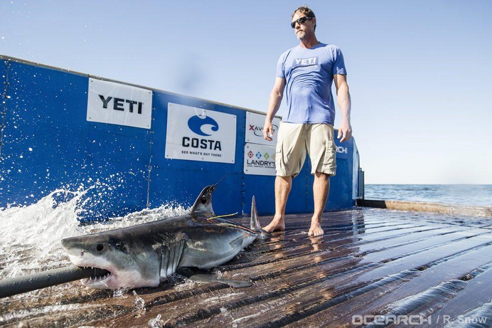 """Ученые нашли """"детский сад"""" для акул в Атлантическом океане"""