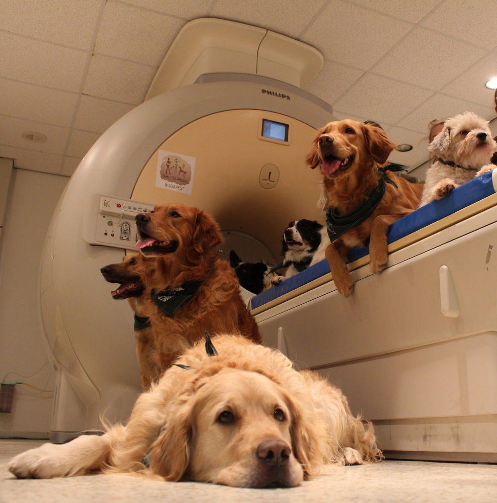 Механизм обработки речи у людей и собак оказался схожим