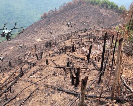 Разработан дрон высаживающий деревья