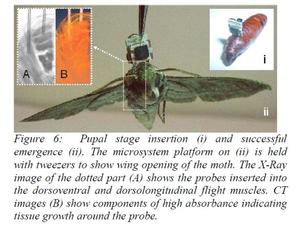 DARPA работает над созданием насекомых-шпионов
