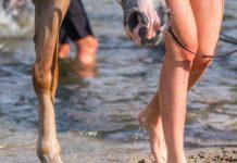 Разработаны амортизирующие подковы для лошадей