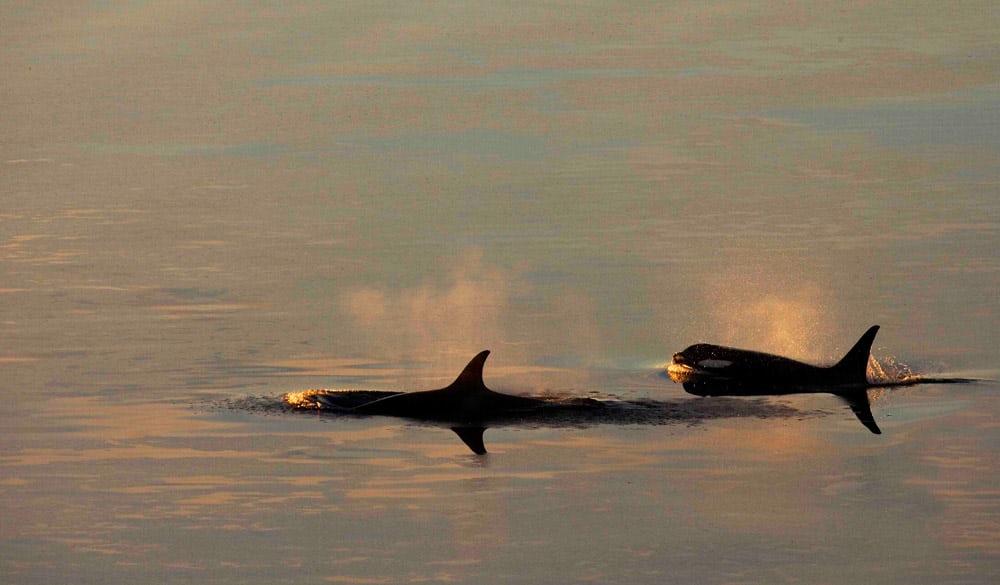 ВАнтарктике будет воспрещено ловить рыбу