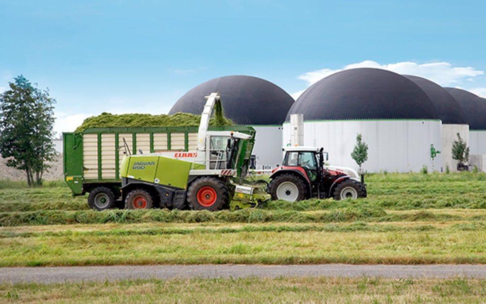 Британские ученые предлагают создавать биотопливо из травы