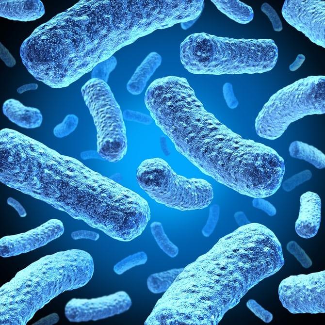 Ученые использовали хищную бактерию как живой антибиотик