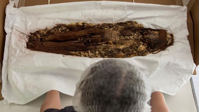 Ученые приступят к новым опытам над старейшими мумиями