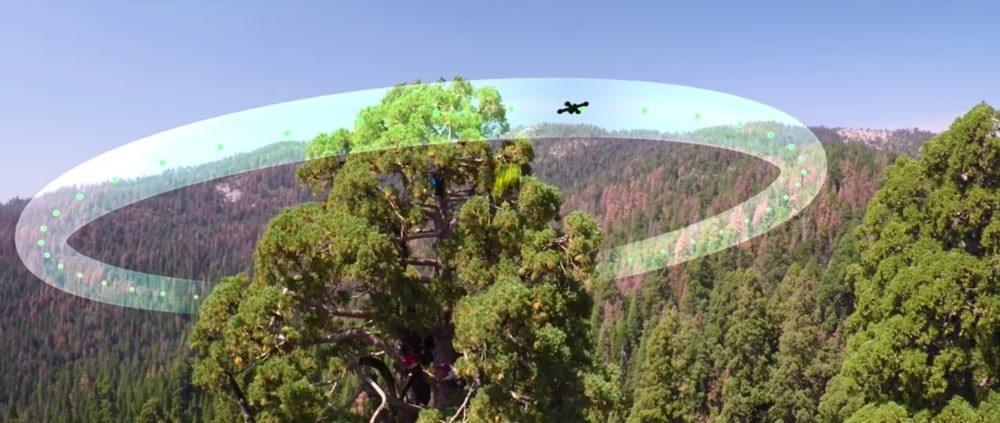 Беспилотники помогают экологам наблюдать за секвойями