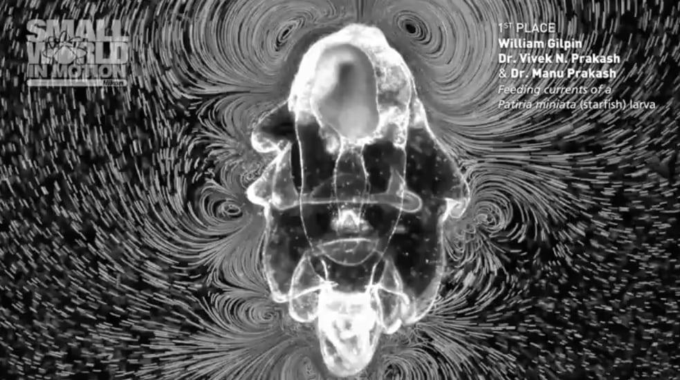 Прошел конкурс видеороликов, снятых под микроскопом