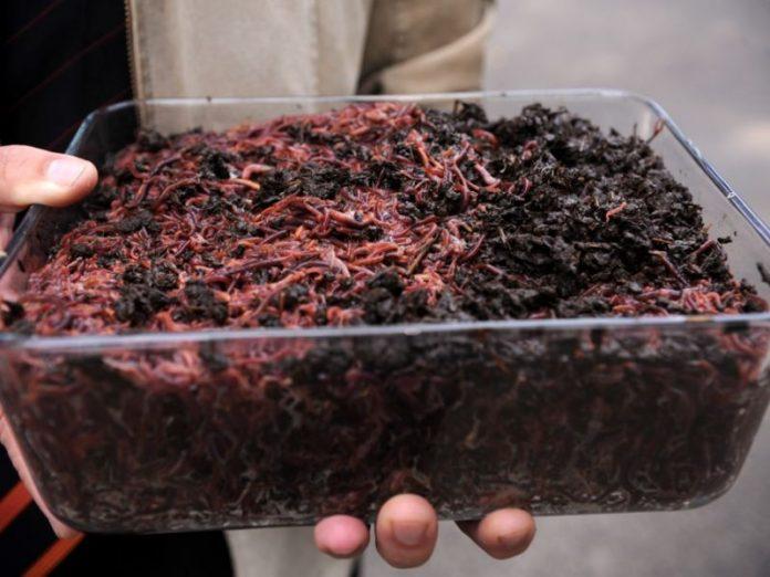 хранение червей навозных червей для рыбалки