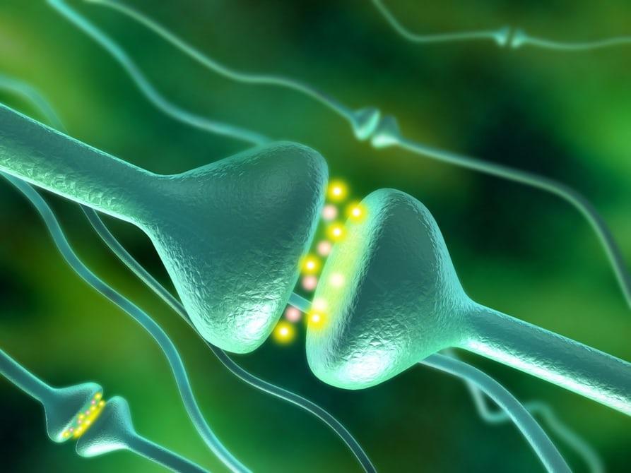Картинки по запросу sinaps artificial