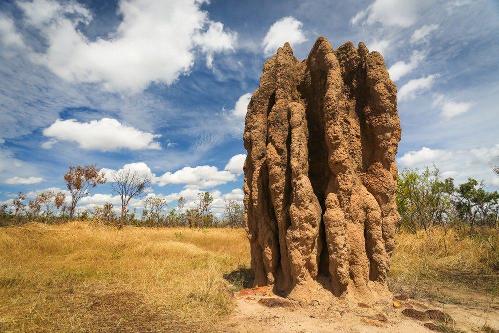 Ученые выяснили, почему термиты начали строить термитники