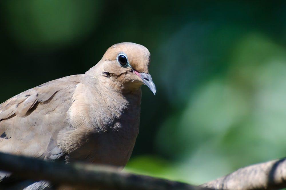 Дроны помогают орнитологам наблюдать за птицами