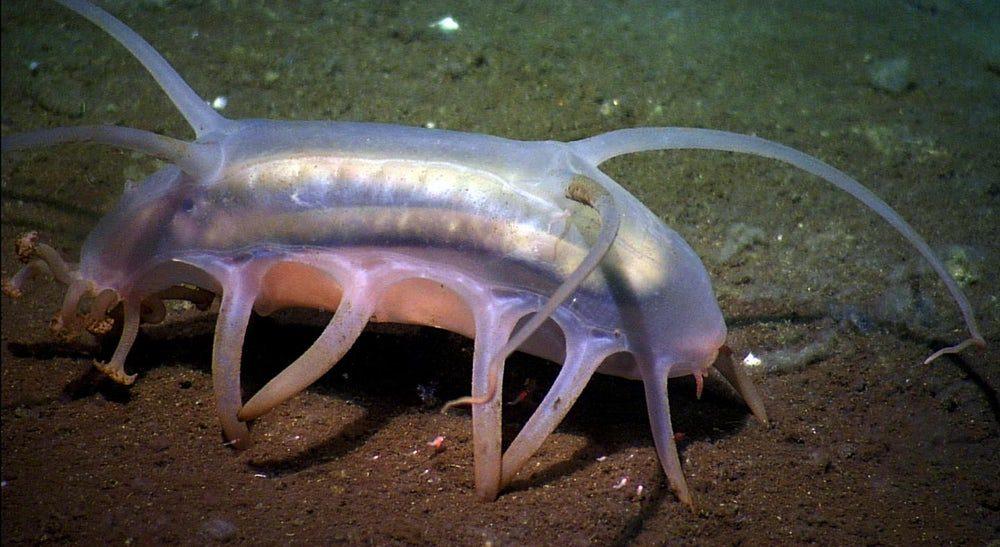 Глубоководных обитателей океана ждет массовый голод