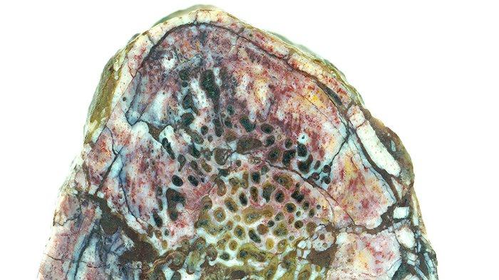 Палеонтологи нашли белковые ткани в древнем динозавре