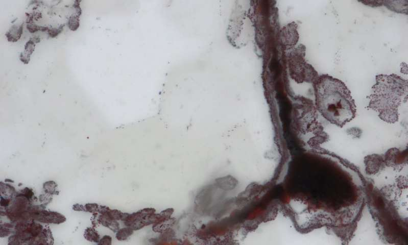 Жизнь миллиарды лет назад: ученые сделали открытие