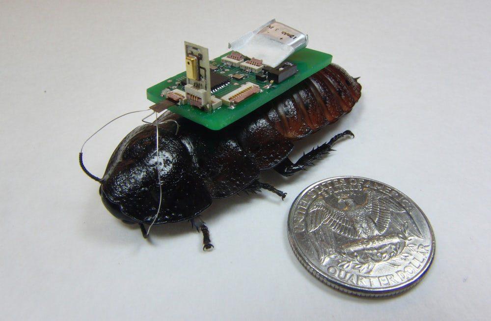 В США тестируют тараканов-киборгов